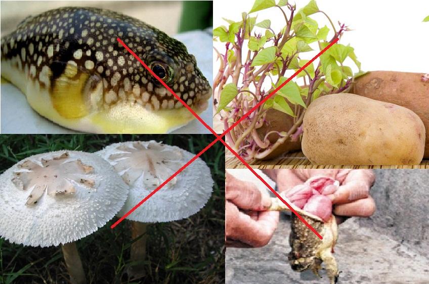Những điều cần biết về vệ sinh an toàn thực phẩm